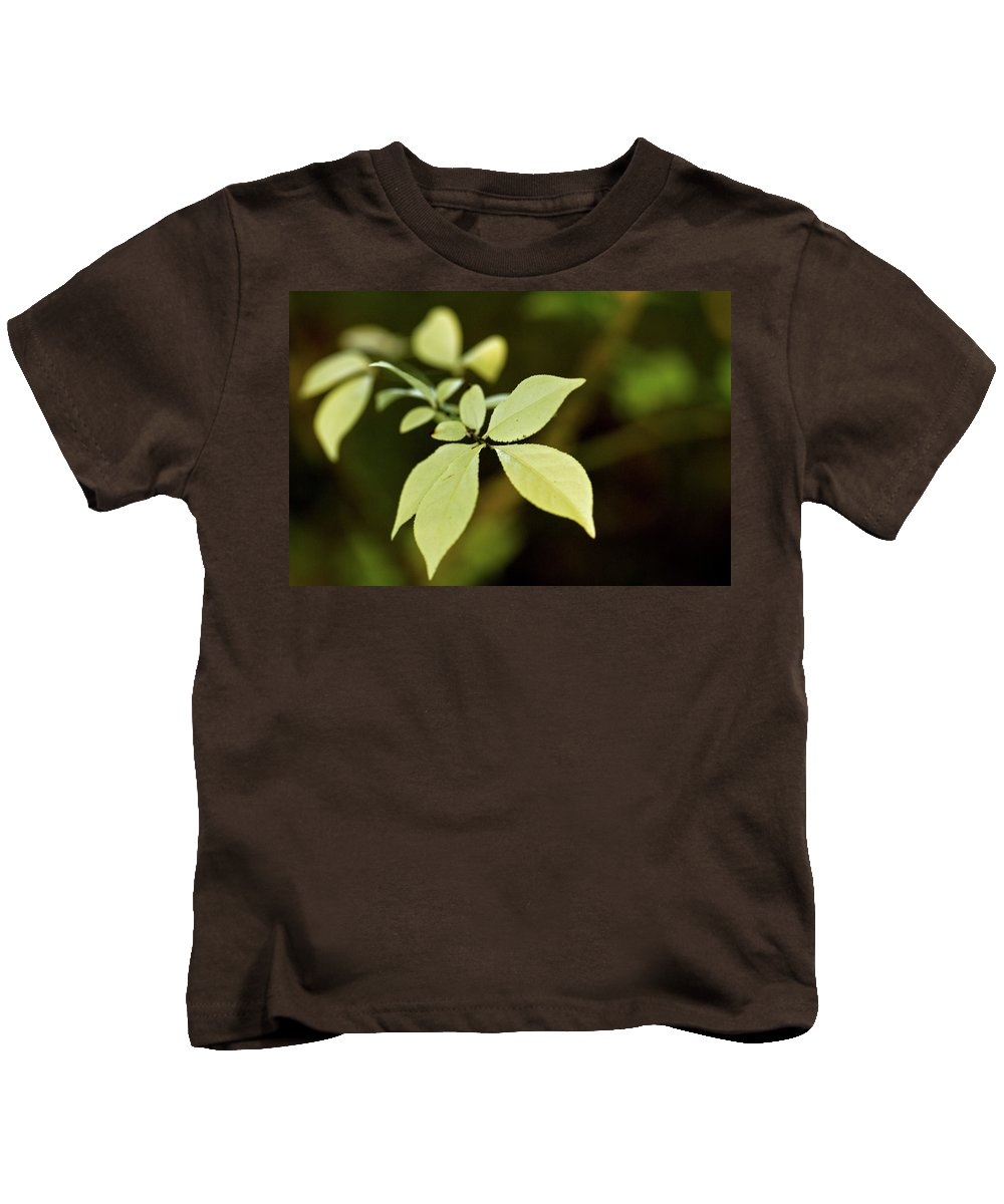albino Leaves Kids T-Shirt featuring the photograph Albino Branch by Paul Mangold