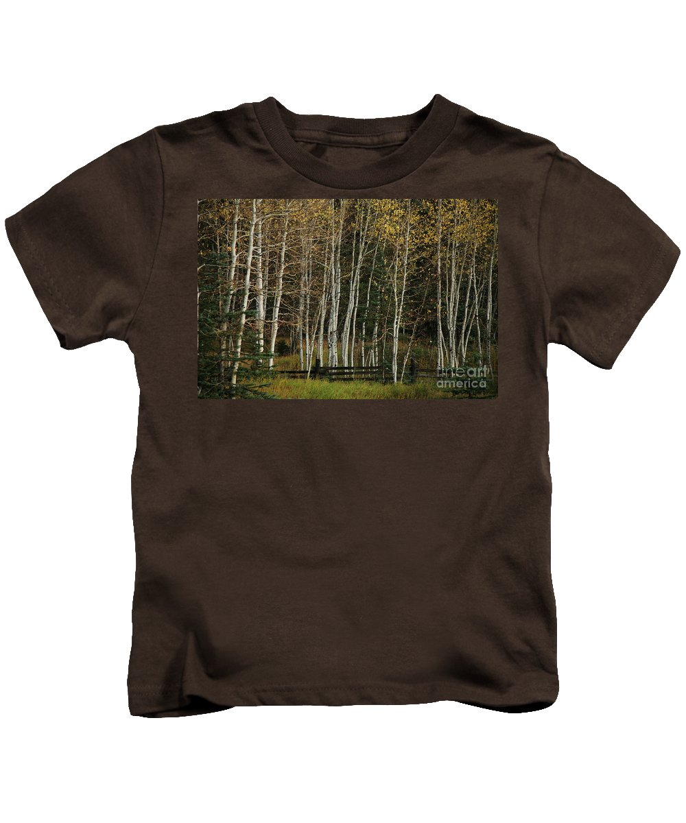 Landscape Kids T-Shirt featuring the photograph Aspens In The Fall by Timothy Johnson