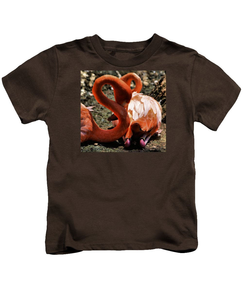 Flamingos Kids T-Shirt featuring the photograph Bew T 2 by Robert McCubbin