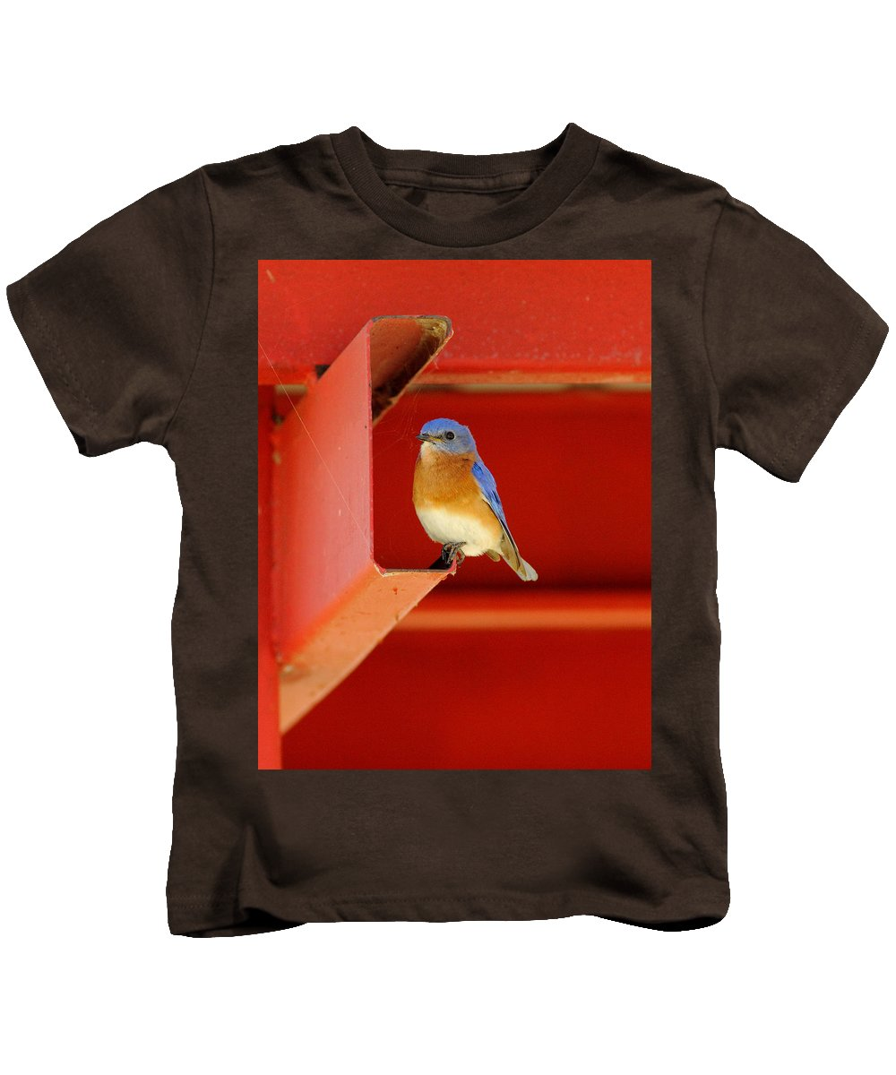 Nature Kids T-Shirt featuring the photograph Bluebird On Red by Robert Frederick
