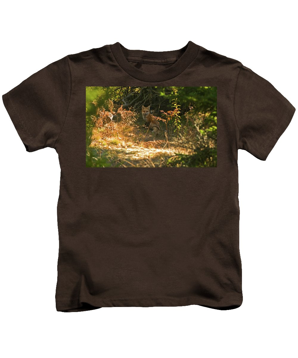 red Fox Kids T-Shirt featuring the photograph Cover Shot by Paul Mangold