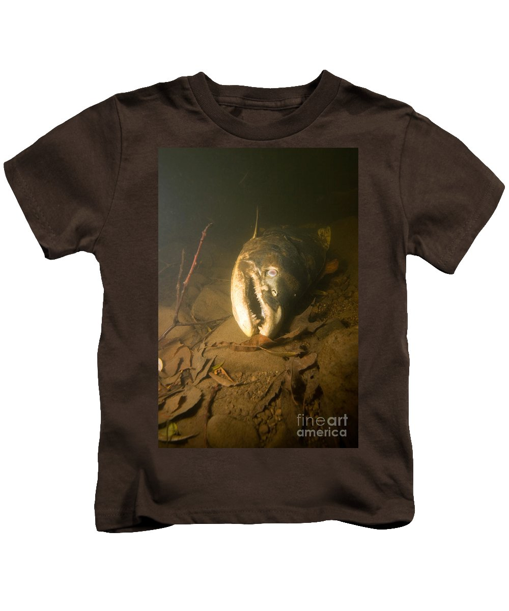 Salmon Kids T-Shirt featuring the photograph Dead Chinook Salmon, Lake Ontario by Ted Kinsman