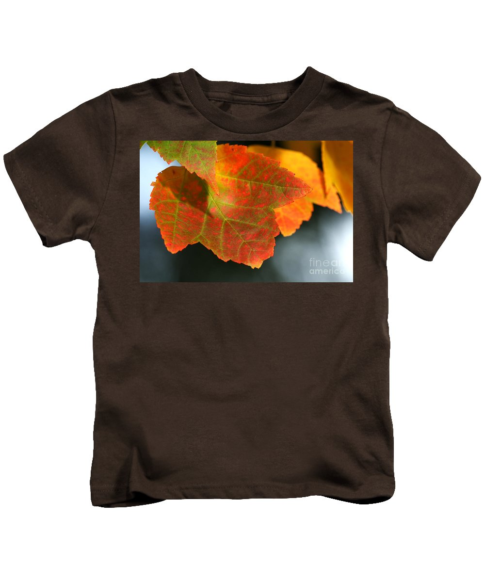 Fall Kids T-Shirt featuring the photograph Fall Color by Sharon Talson