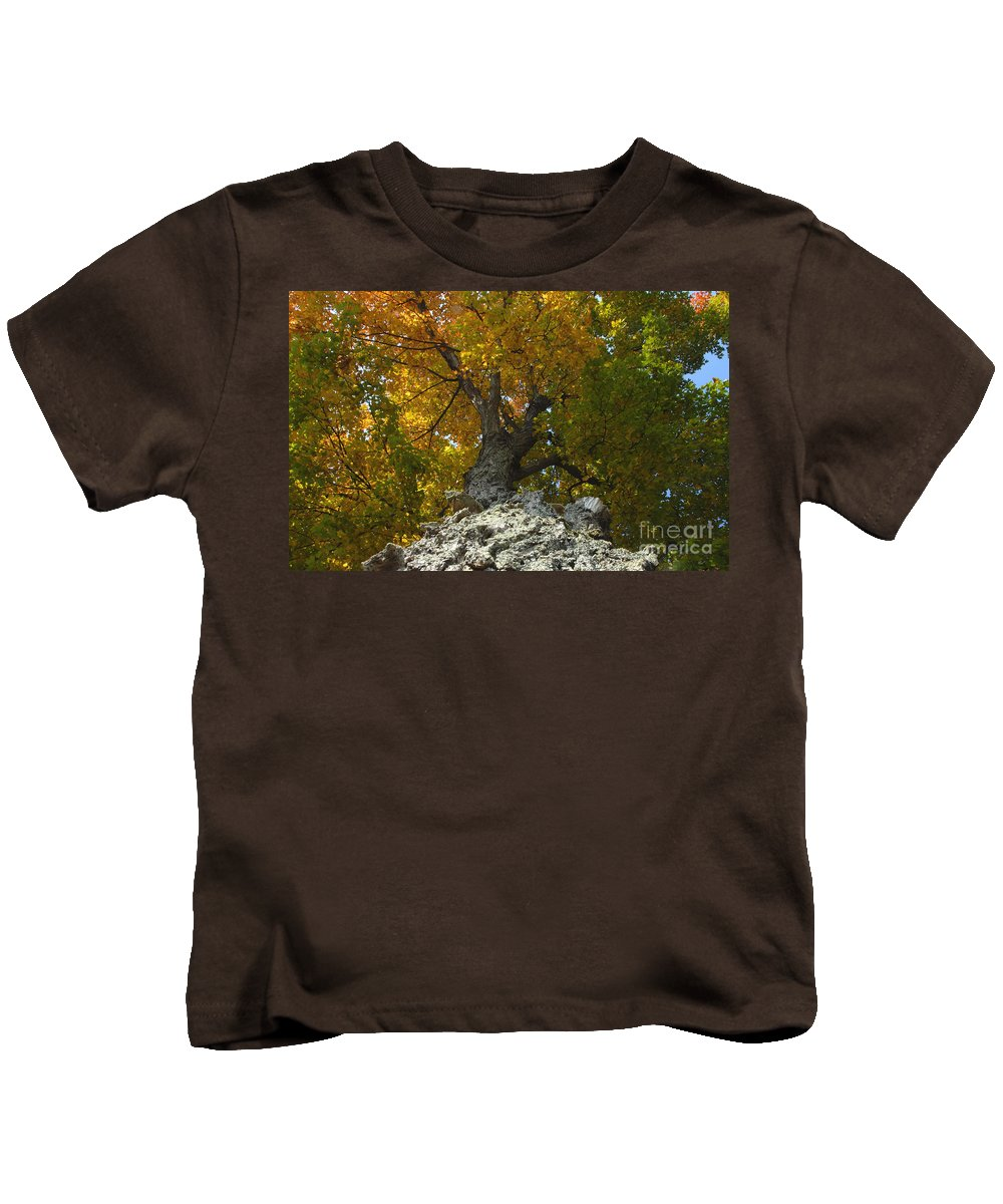 Fall Kids T-Shirt featuring the photograph Falling Tree by David Lee Thompson