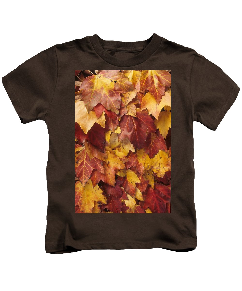 Fall Kids T-Shirt featuring the photograph Final Fall In File by Laurie Paci
