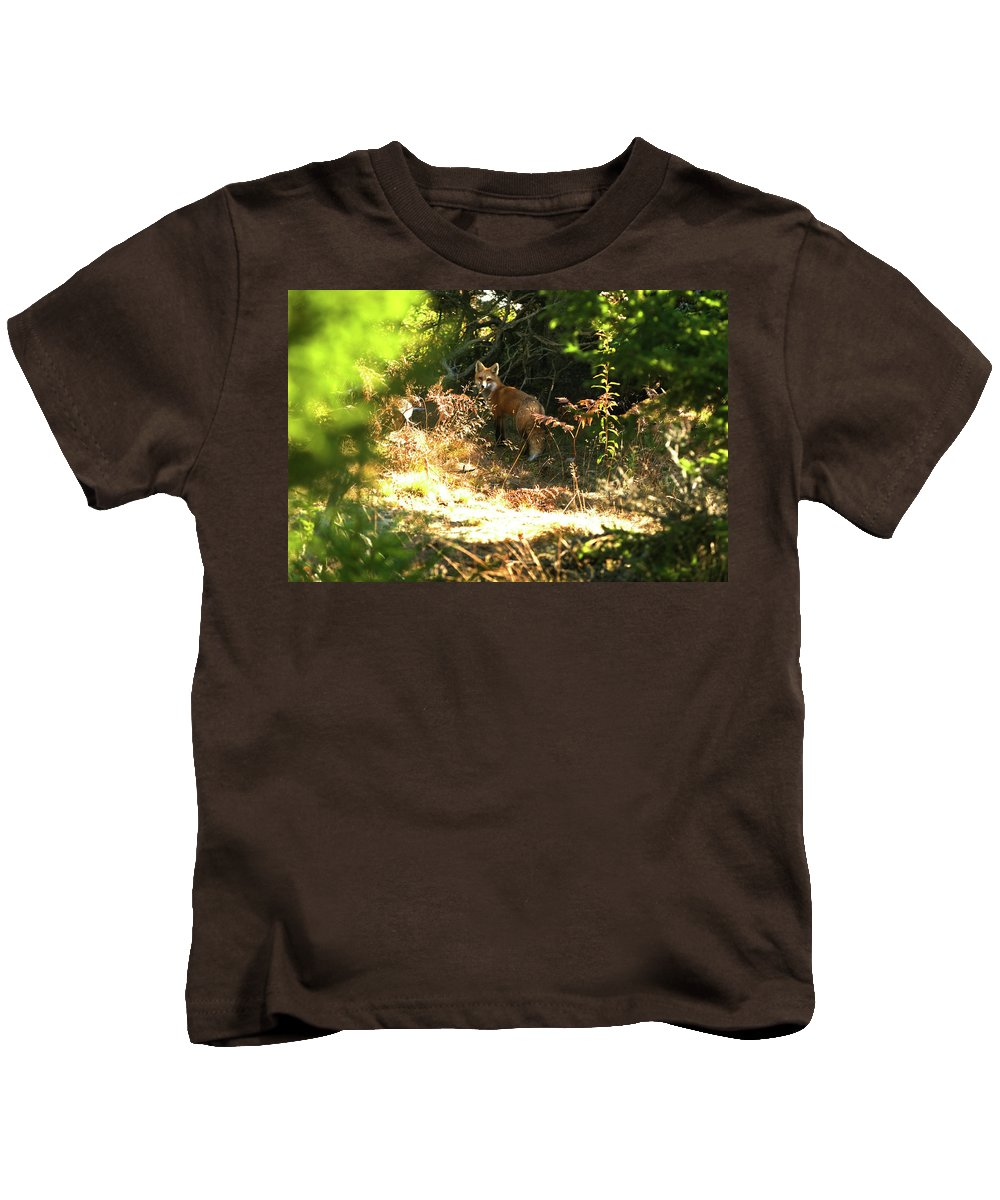 red Fox Kids T-Shirt featuring the photograph Follow Me by Paul Mangold