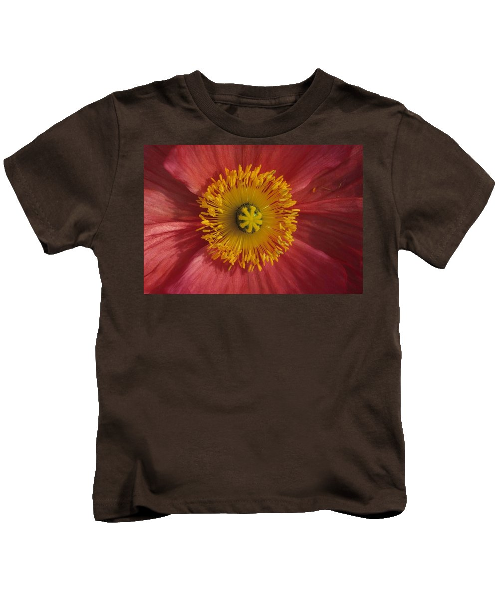 Gerber Daisy Kids T-Shirt featuring the photograph Gerber Greetings by Laurie Paci