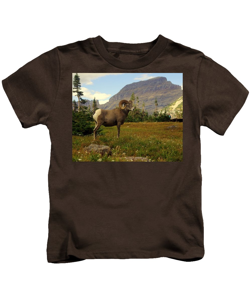 Big Horn Sheep Kids T-Shirt featuring the photograph Master Of His Domain by Marty Koch