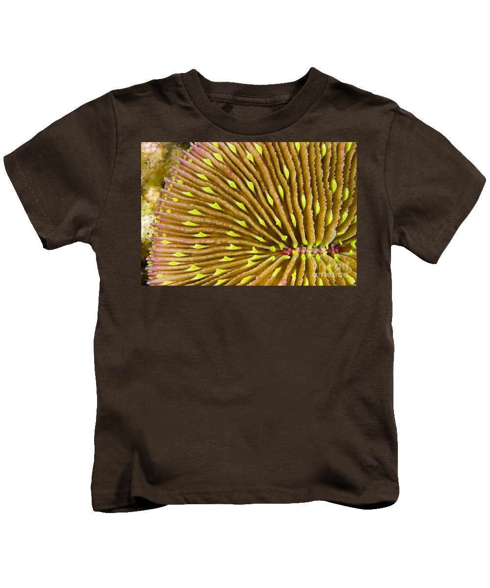 Above Kids T-Shirt featuring the photograph Mushroom Coral by Dave Fleetham - Printscapes