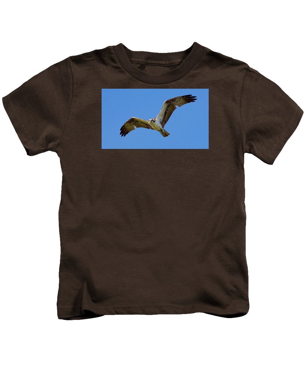 Osprey In Flight Overhead While Walking The Beach On Big Pine Key In The National Key Deer Refuge If The Florida Keys Kids T-Shirt featuring the photograph Osprey In Flight by Mark Reinnoldt