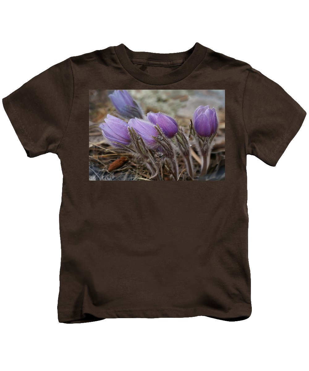 Pasque Flower Kids T-Shirt featuring the photograph Pasque Flower Watercolor by Heather Coen