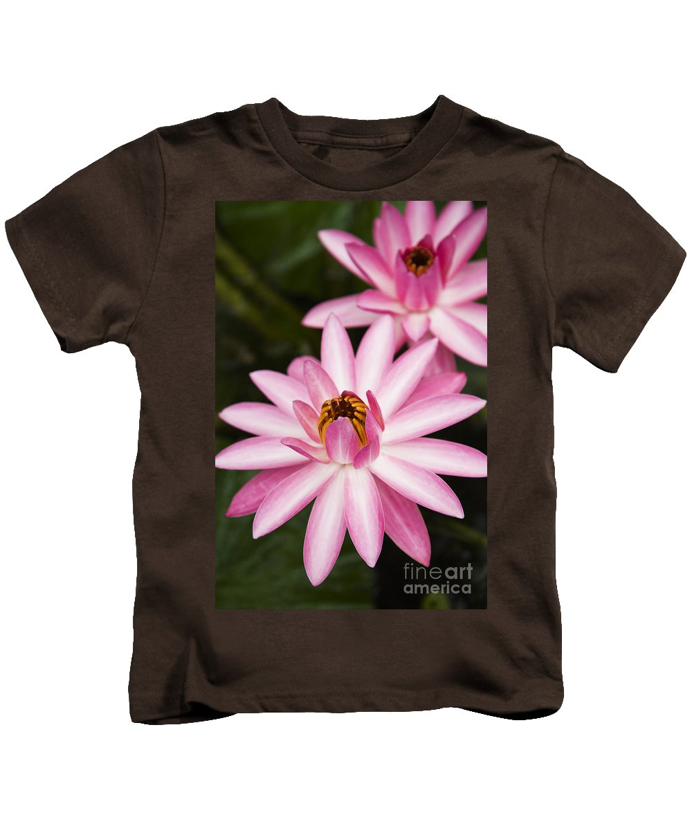 Afternoon Kids T-Shirt featuring the photograph Pink Lotus Blossoms by Dana Edmunds - Printscapes