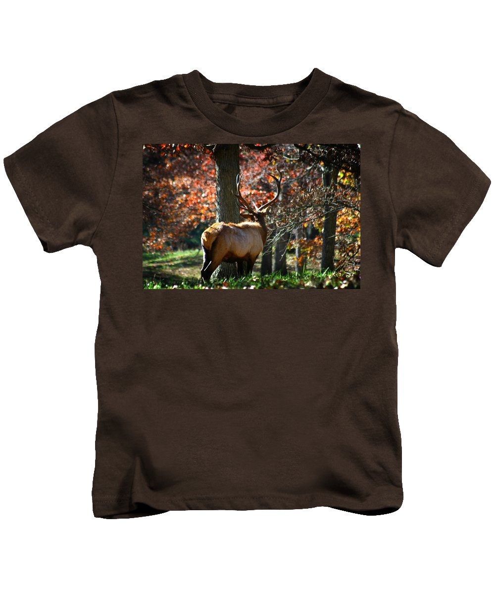 Elk Kids T-Shirt featuring the photograph Red Elk by Anthony Jones