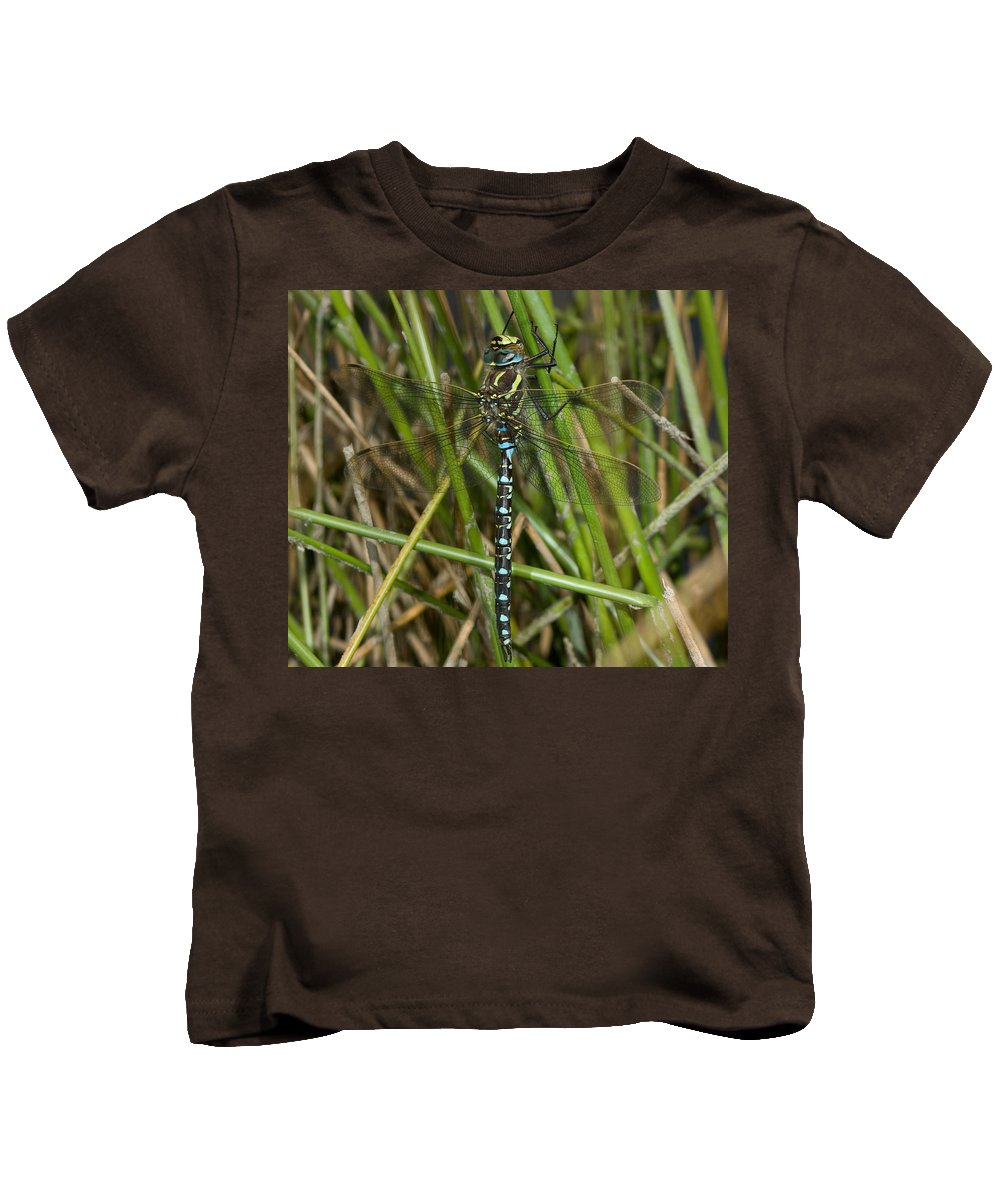 Dragonfly Kids T-Shirt featuring the photograph Resting Darner by Bob Kemp