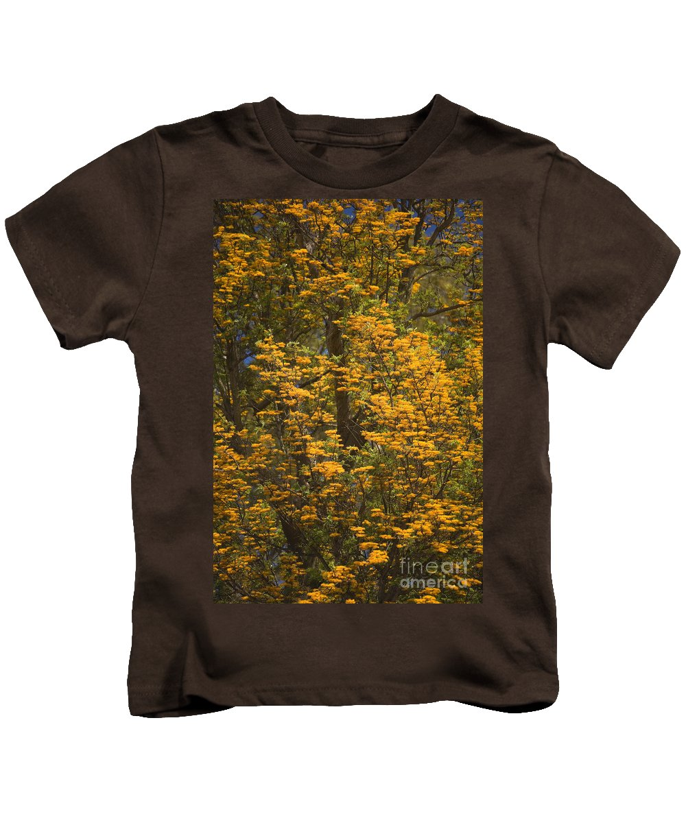 Bloom Kids T-Shirt featuring the photograph Silver Oak by Ron Dahlquist - Printscapes