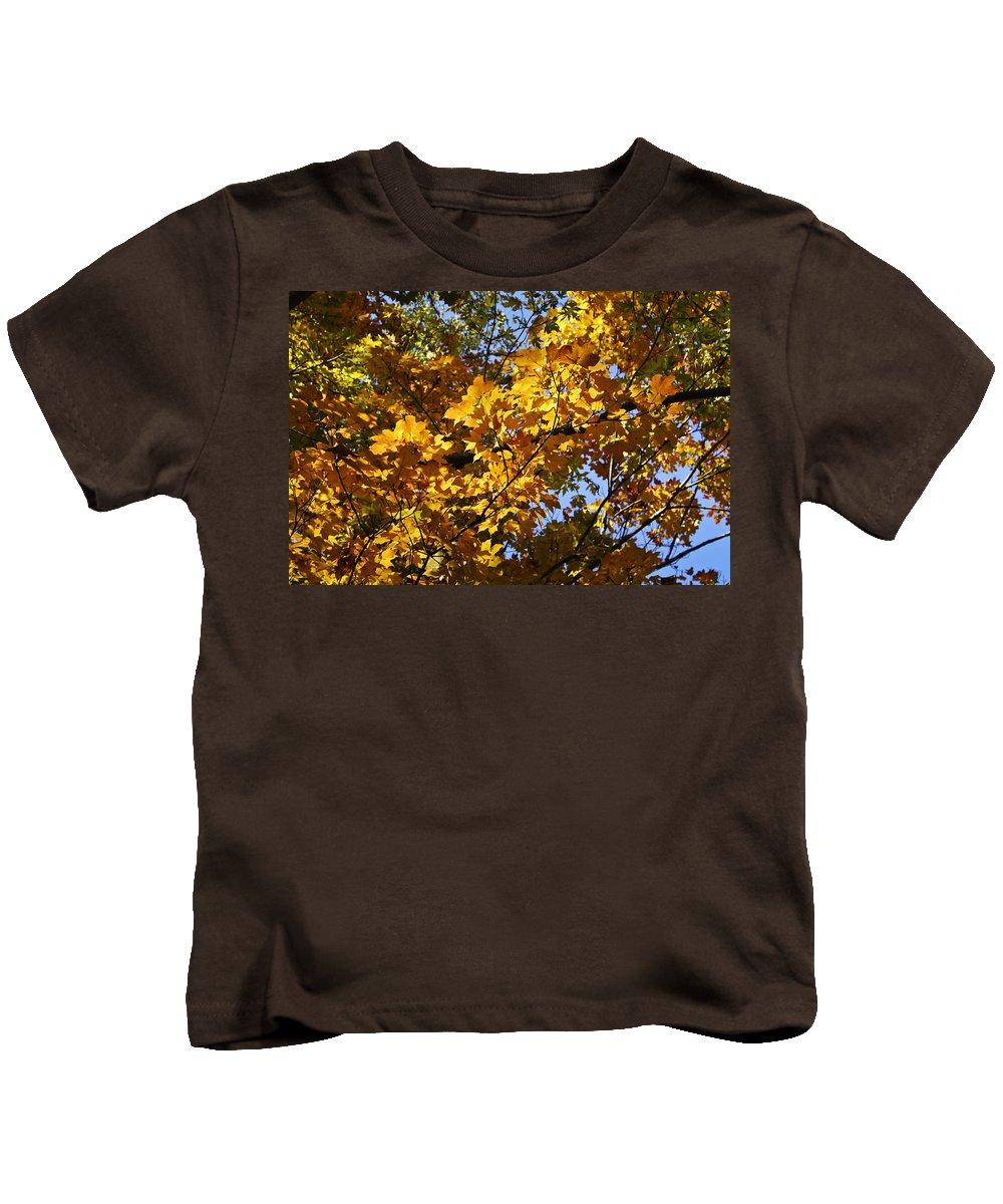 Sugar Kids T-Shirt featuring the photograph Sugar Maple by Teresa Mucha