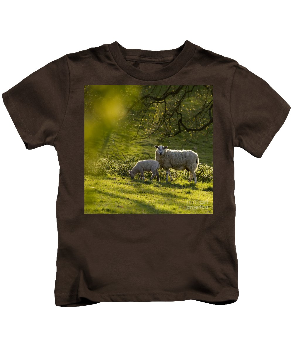 Lamb Kids T-Shirt featuring the photograph Under The Setting Sun by Angel Ciesniarska