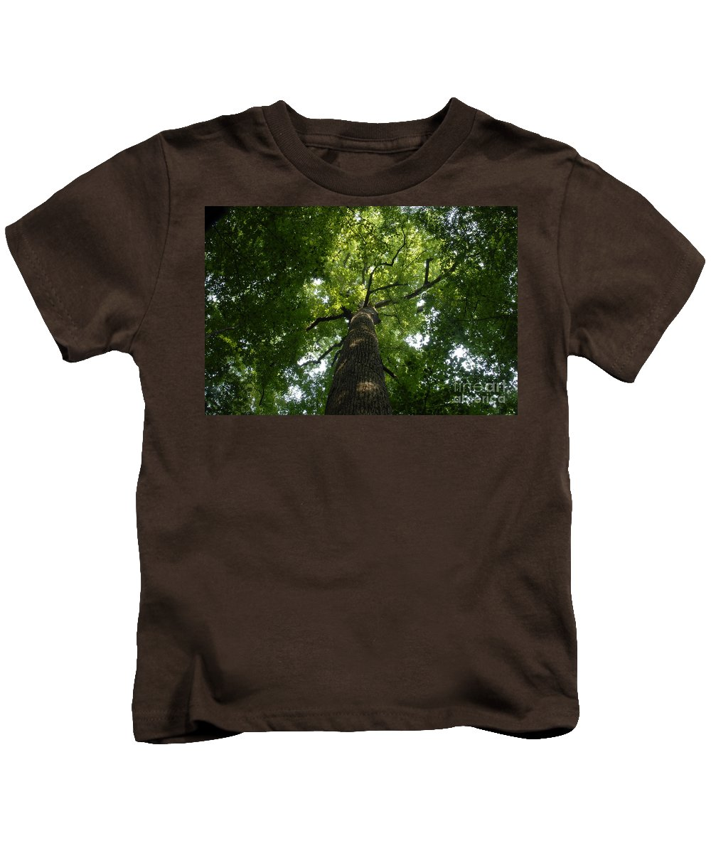 Joyce Kilmer Memorial Forest Kids T-Shirt featuring the photograph Virgin Canopy by David Lee Thompson