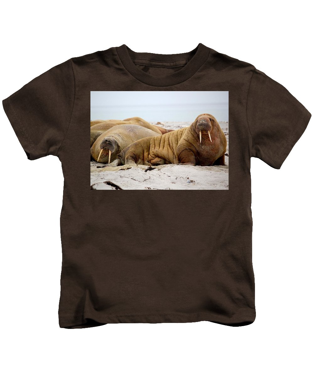 Walrus Kids T-Shirt featuring the photograph Walrus Family by Happy Home Artistry