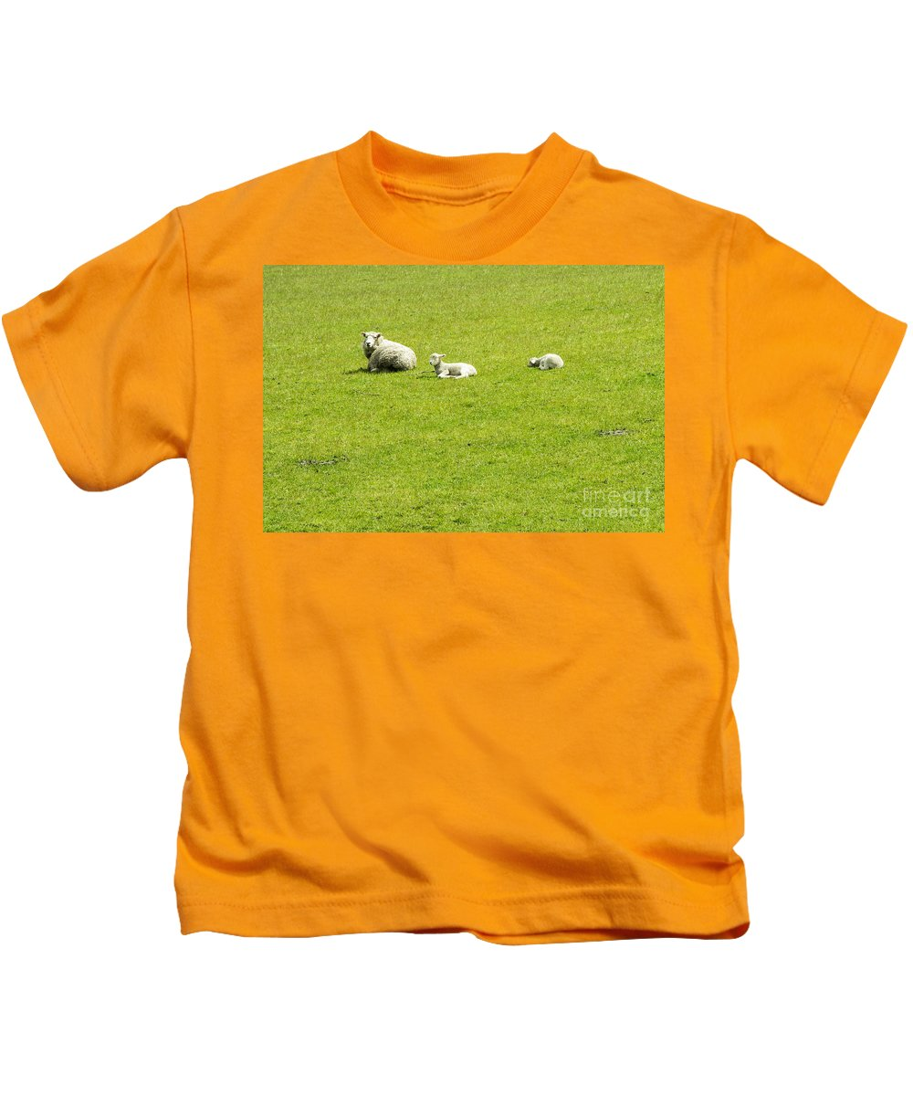New Zealand Sheep Lamb Lambs Animal Animals Creature Creatures Grass Kids T-Shirt featuring the photograph Mom And Kids by Bob Phillips