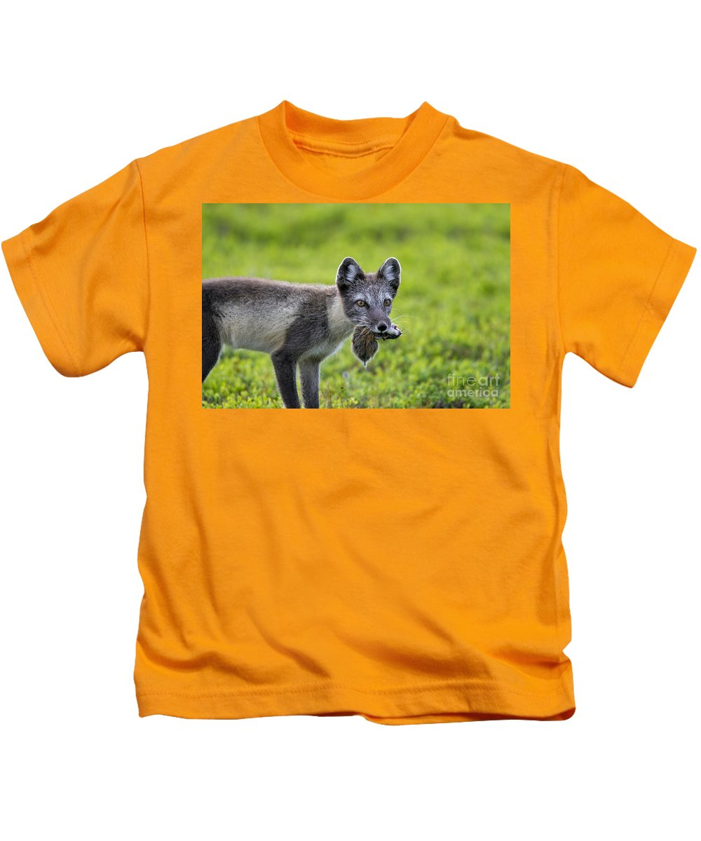Arctic Fox Kids T-Shirt featuring the photograph 111130p047 by Arterra Picture Library