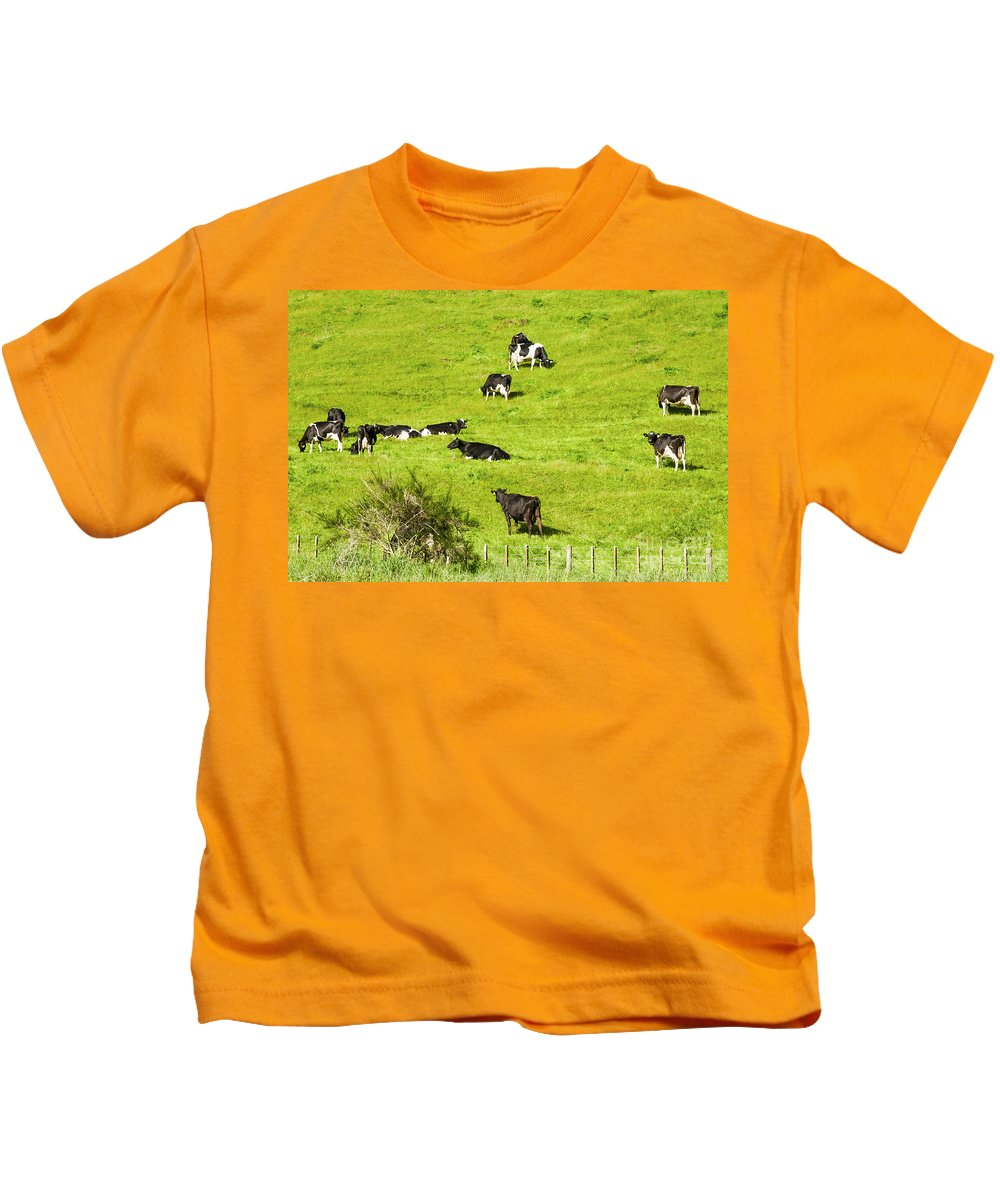 New Zealand Cow Cows Cattle Animal Animals Creature Creatures Grass Landscape Landscapes Fence Fences Kids T-Shirt featuring the photograph Grazing by Bob Phillips