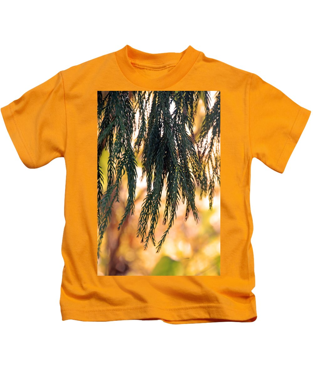 National Arboretum Kids T-Shirt featuring the photograph Hanging Pine by Carolyn Stagger Cokley