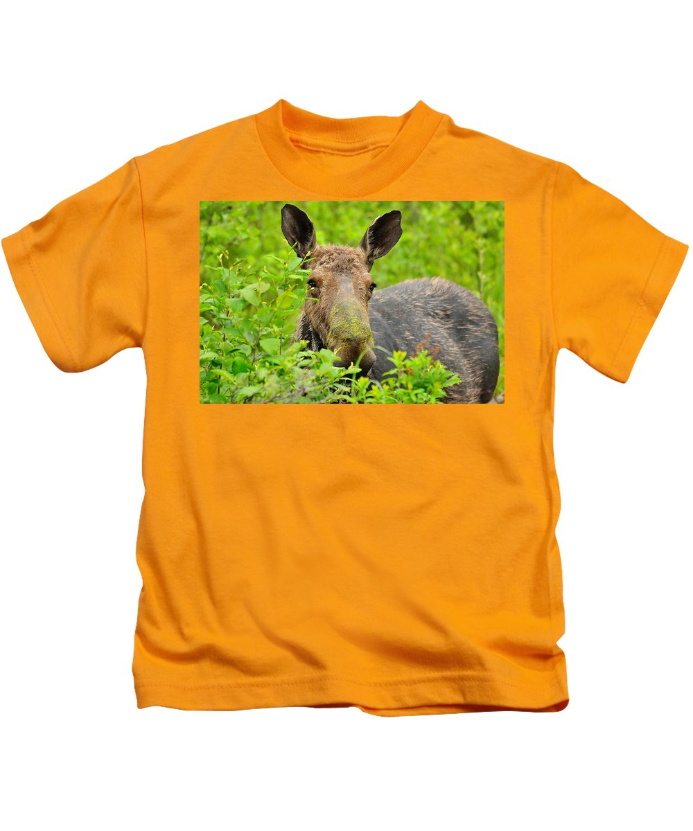 Alces Alces Kids T-Shirt featuring the photograph Mossy Moose by Joshua McCullough