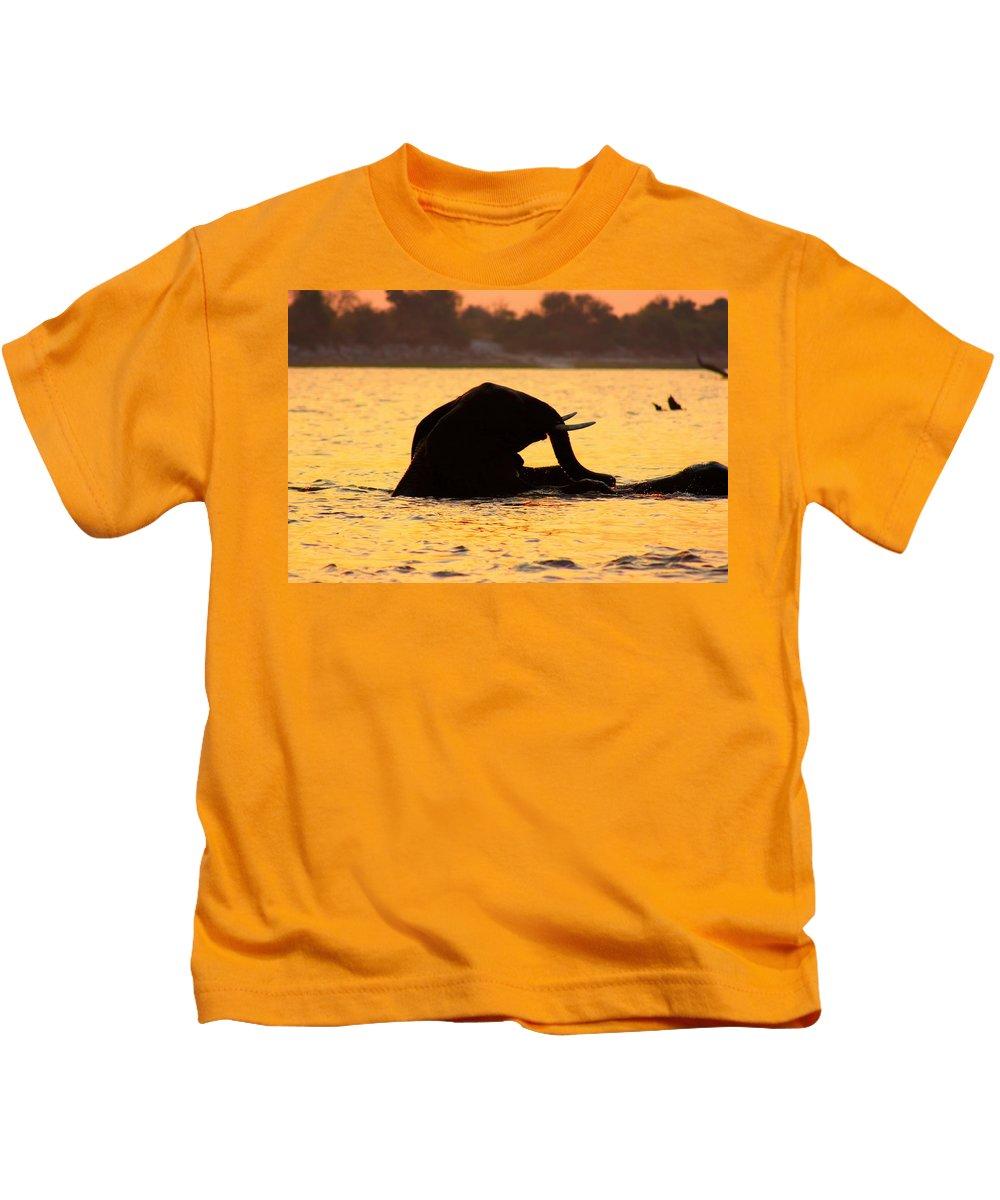 Elephants Kids T-Shirt featuring the photograph Swimming Kalahari Elephants by Amanda Stadther