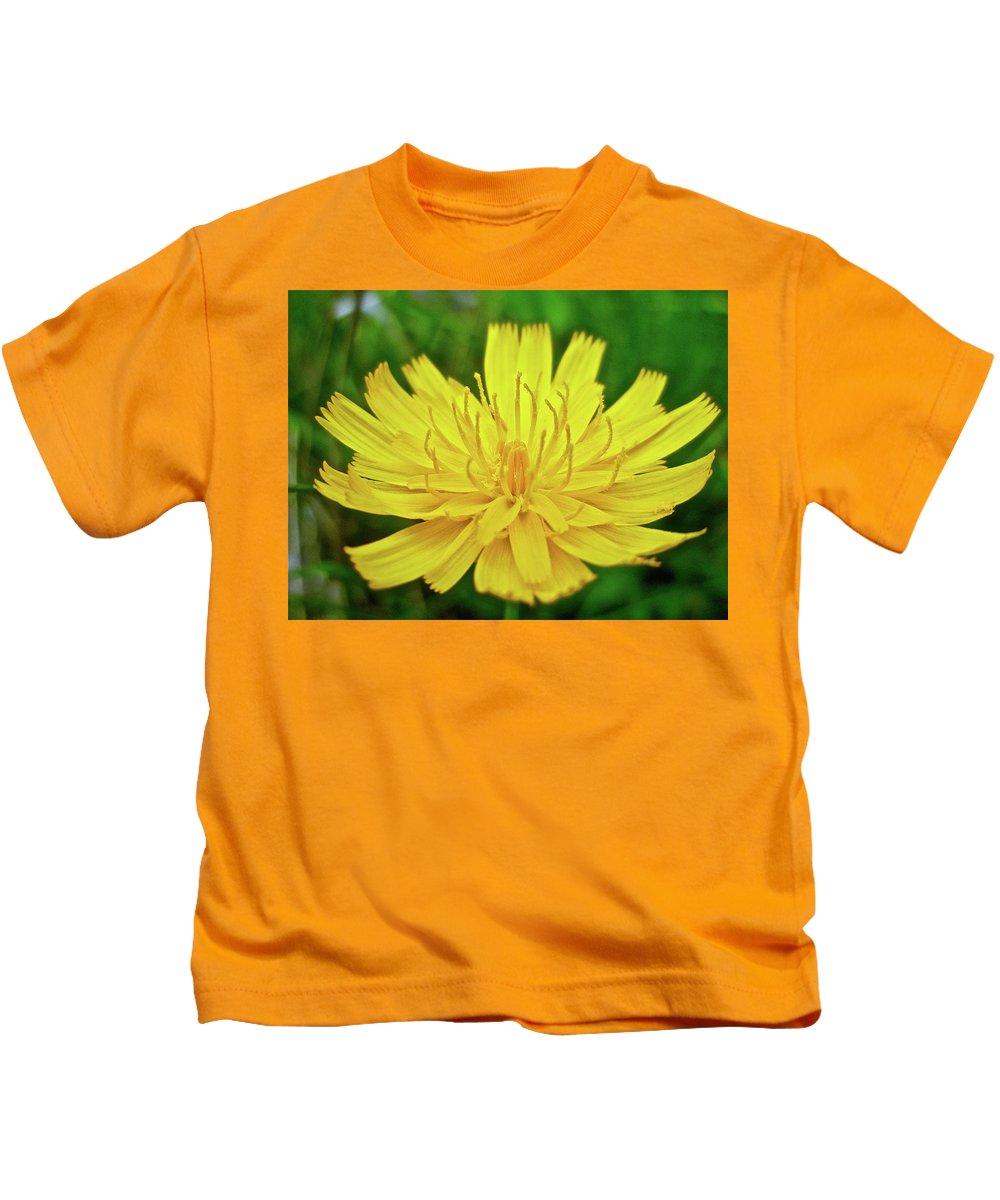 Hawkweed Kids T-Shirt featuring the photograph Yellow Hawkweed - Hieracium Caespitosum by Mother Nature