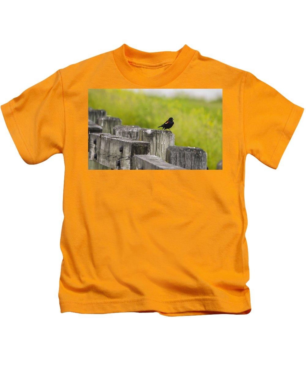 Blackbird Kids T-Shirt featuring the photograph Alone by Douglas Neumann