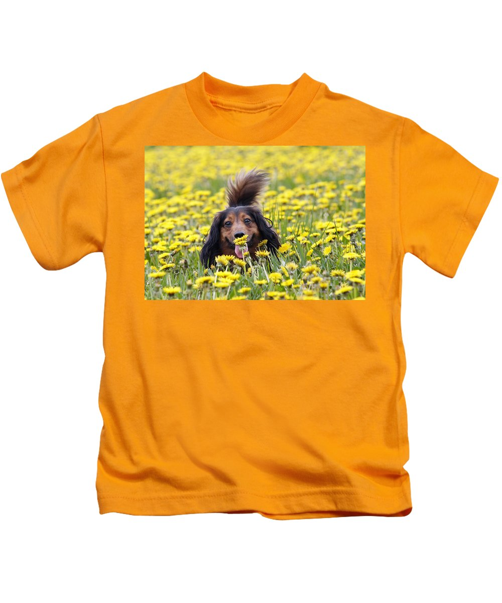 Dachshund Kids T-Shirt featuring the photograph Dachshund On A Meadow In Bloom by Michal Boubin