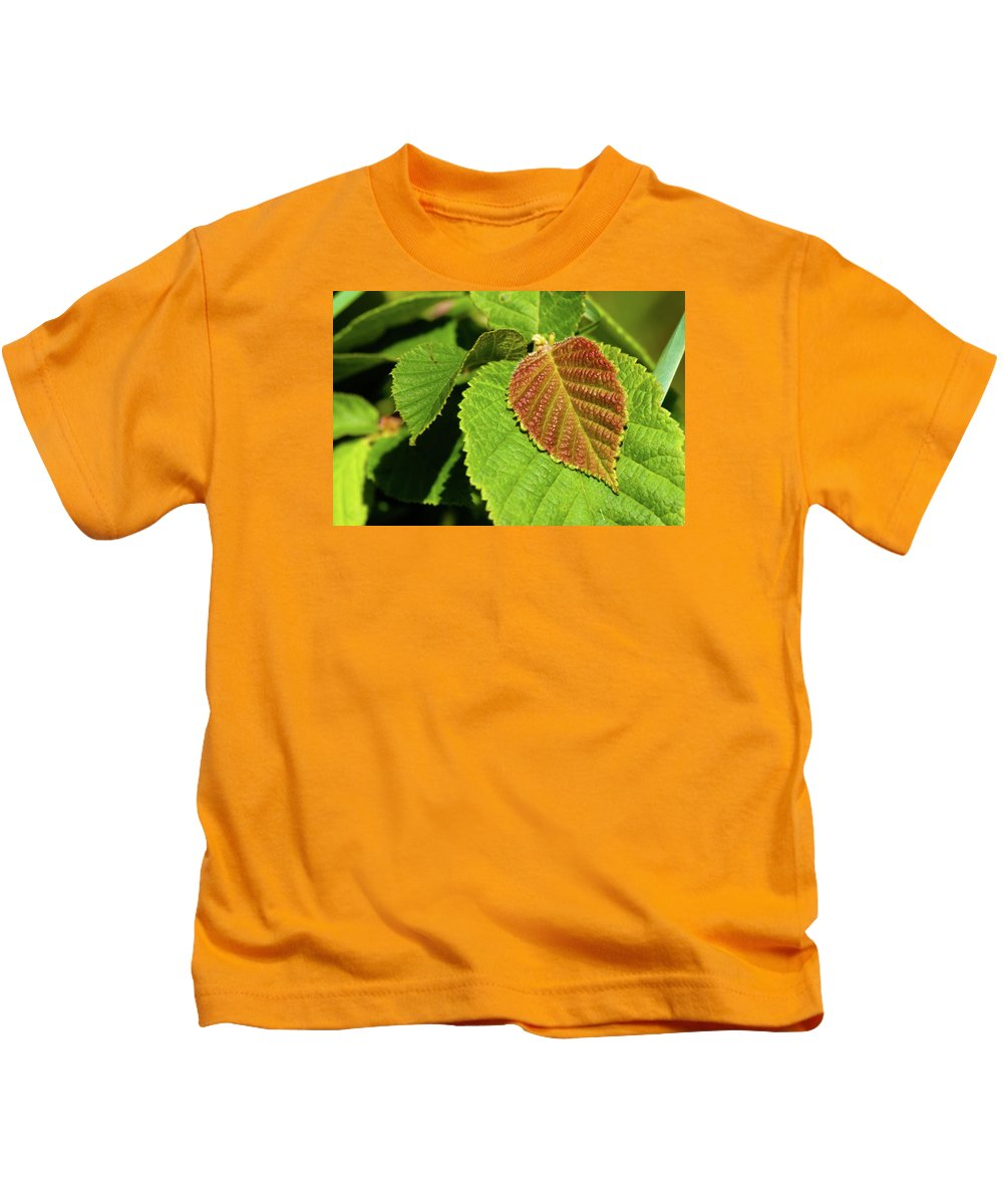 Hazelnut Kids T-Shirt featuring the photograph Filbert Leaf by Grant Groberg