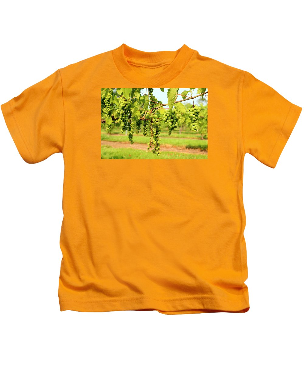 Winery Kids T-Shirt featuring the photograph Old York Winery Grapes by Brian Manfra