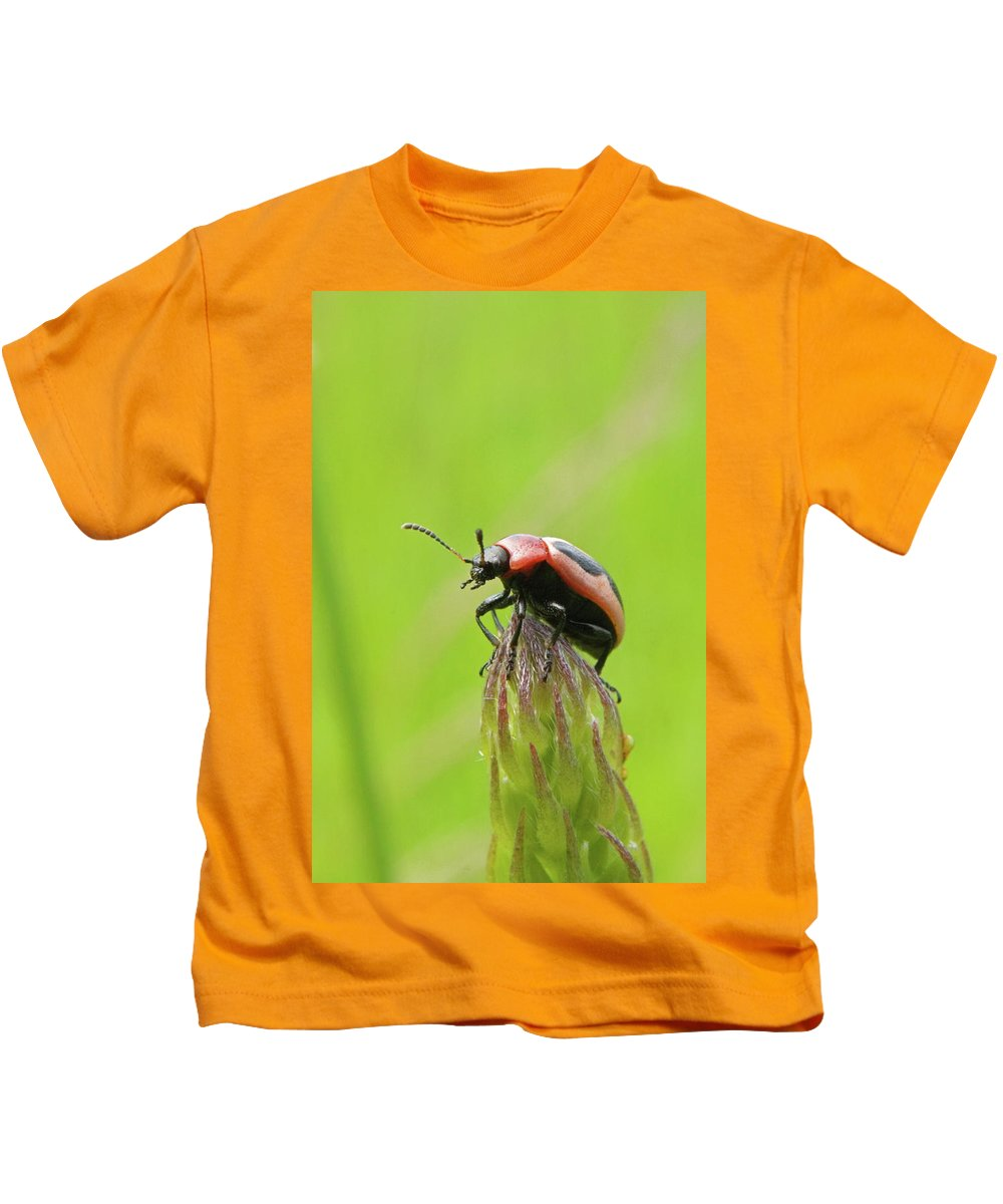 Beetle Kids T-Shirt featuring the photograph The Summit by Randall Ingalls