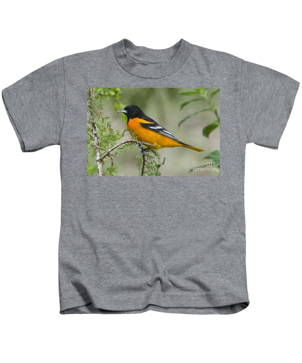 Baltimore Oriole Kids T-Shirt featuring the photograph Baltimore Oriole by Anthony Mercieca