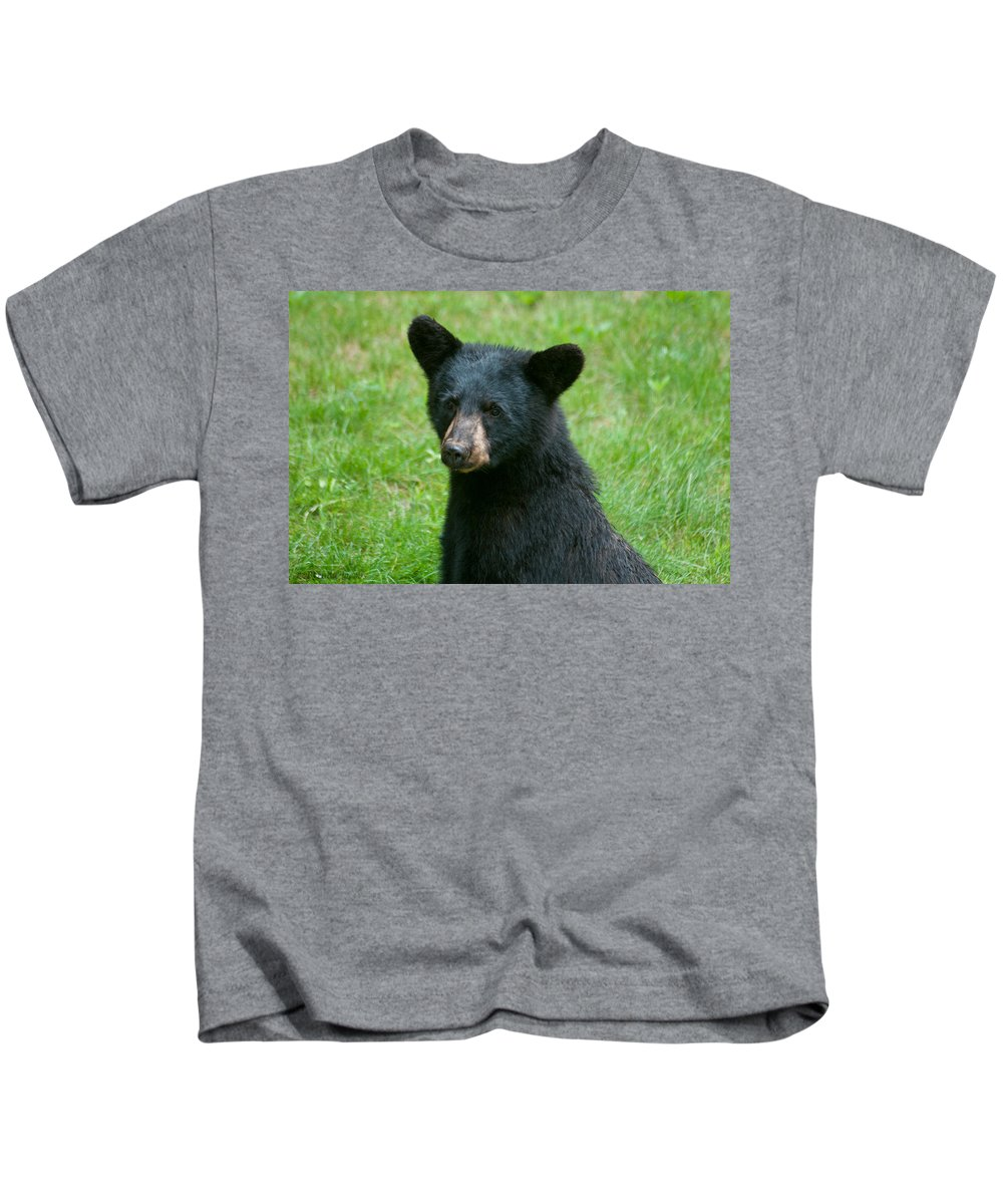 Black Bears Kids T-Shirt featuring the photograph Black Bear Cub by Brenda Jacobs