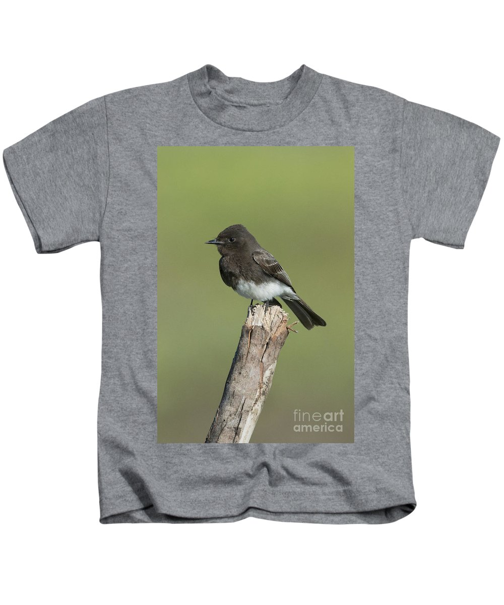 Black Phoebe Kids T-Shirt featuring the photograph Black Phoebe by Anthony Mercieca