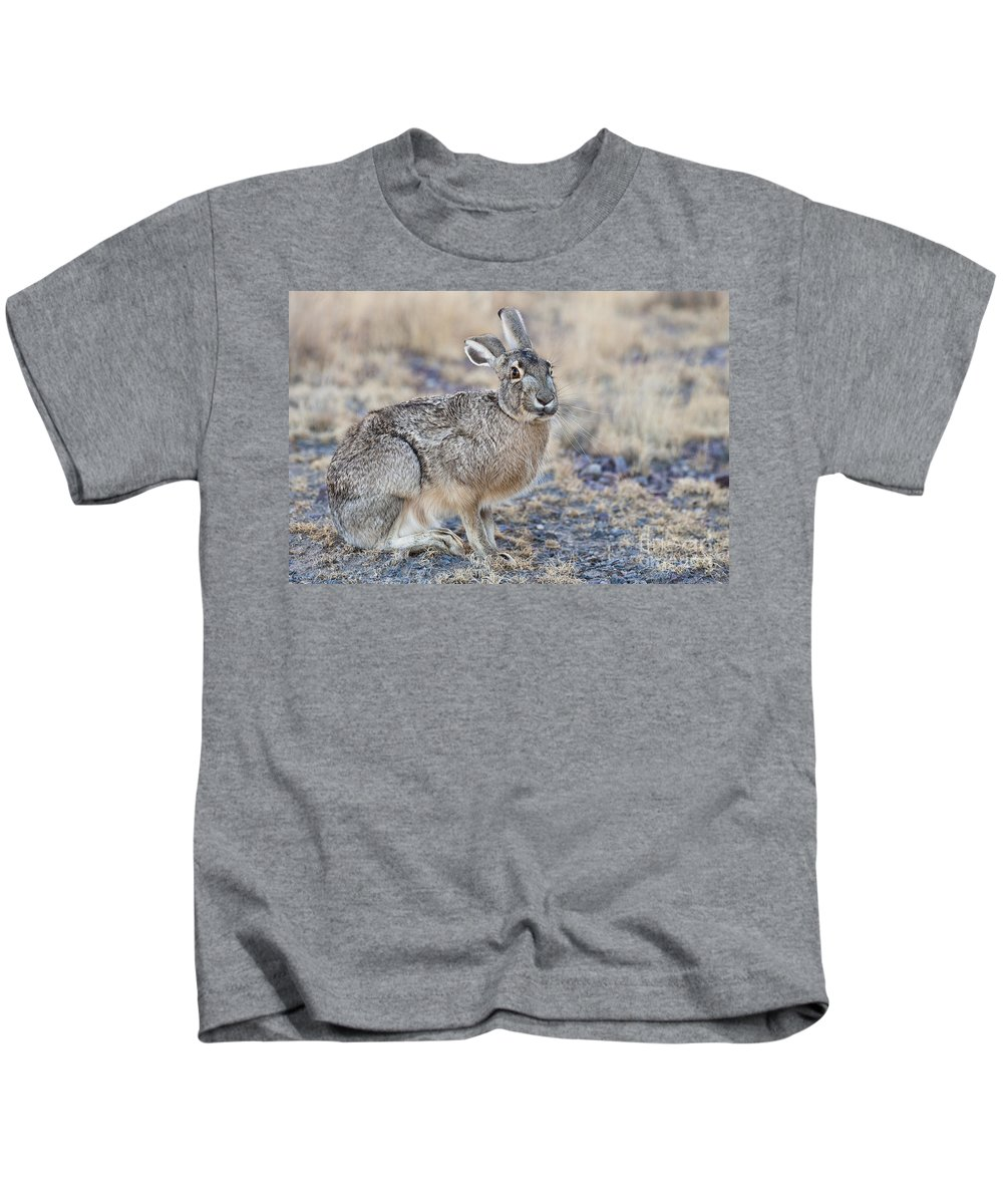 Lepus Californicus Kids T-Shirt featuring the photograph Black-tailed Jackrabbit by John Shaw
