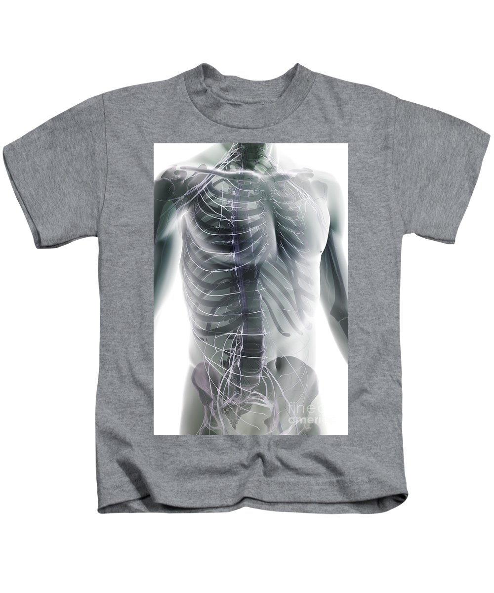 Biomedical Illustration Kids T-Shirt featuring the photograph Nerves Of The Trunk by Science Picture Co