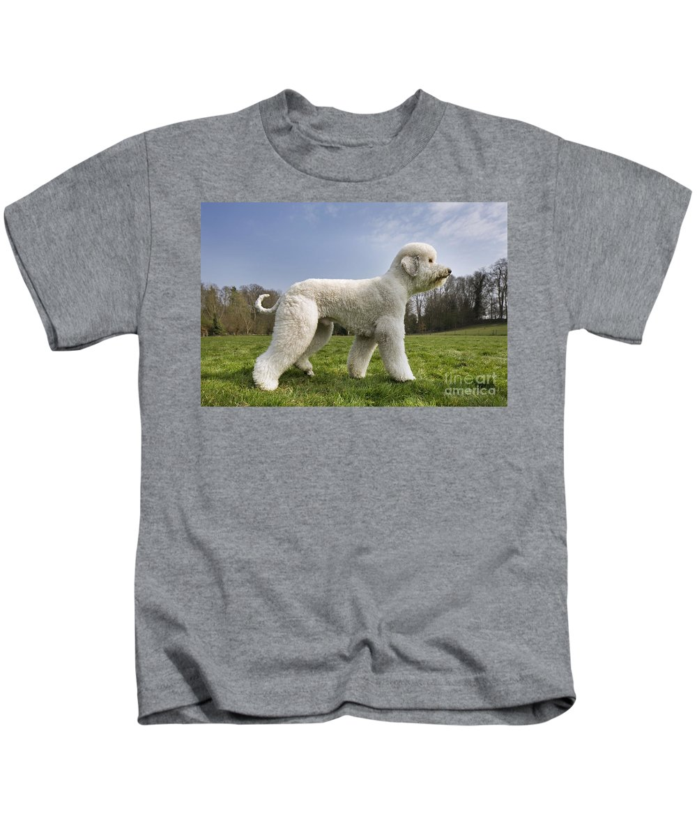 Standard Poodle Kids T-Shirt featuring the photograph 110506p134 by Arterra Picture Library