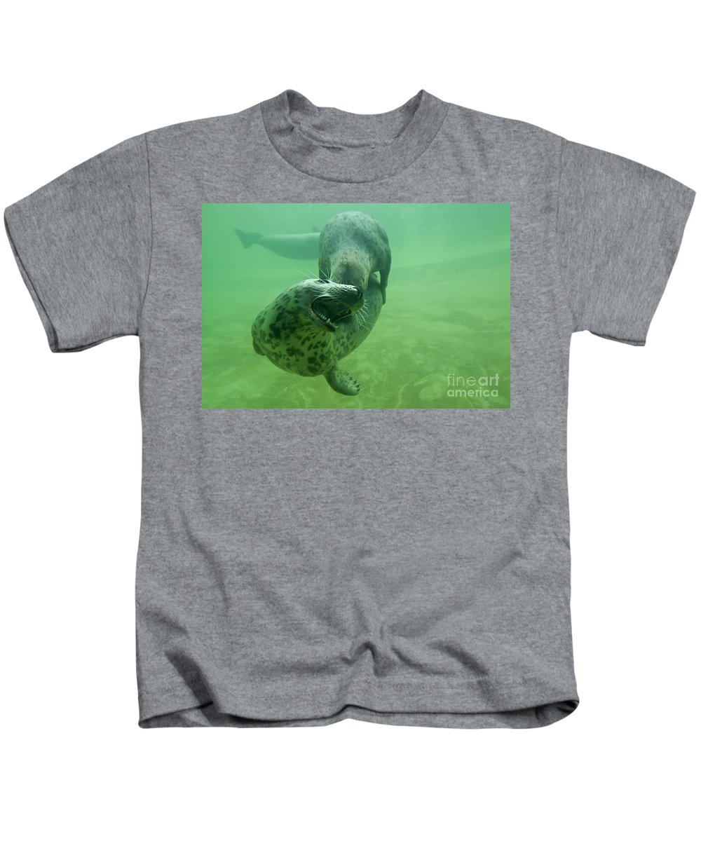 Grey Seal Kids T-Shirt featuring the photograph 110714p237 by Arterra Picture Library