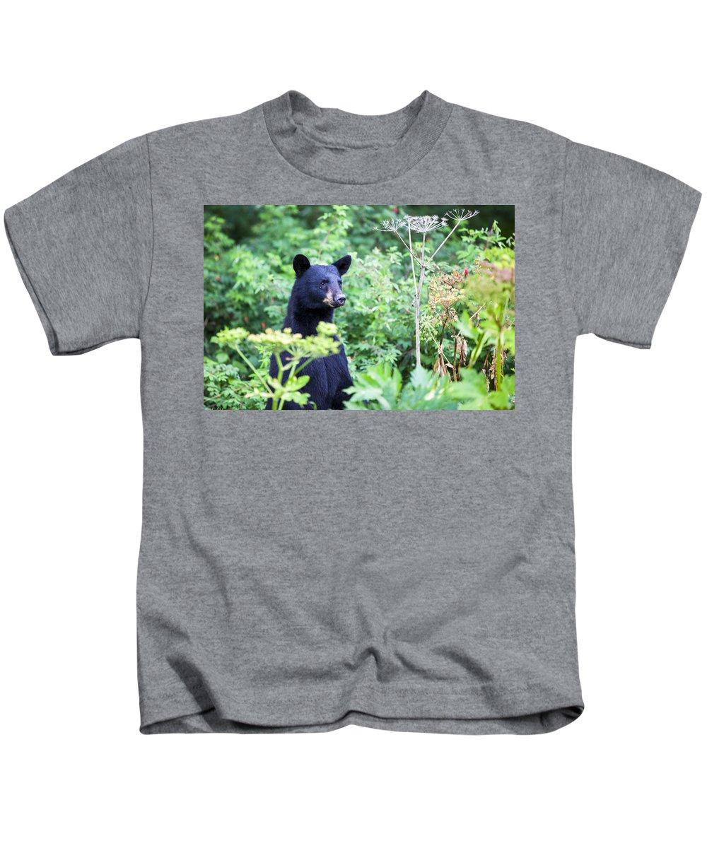 Alaska Kids T-Shirt featuring the photograph Black Bear by Kyle Lavey