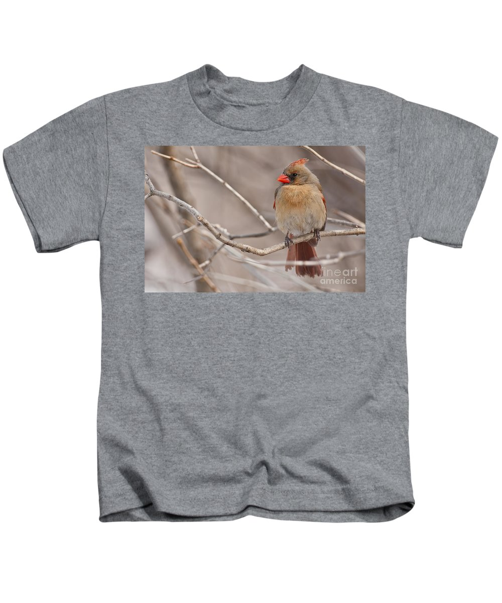 Michael Cummings Kids T-Shirt featuring the photograph Female Northern Cardinal by Michael Cummings