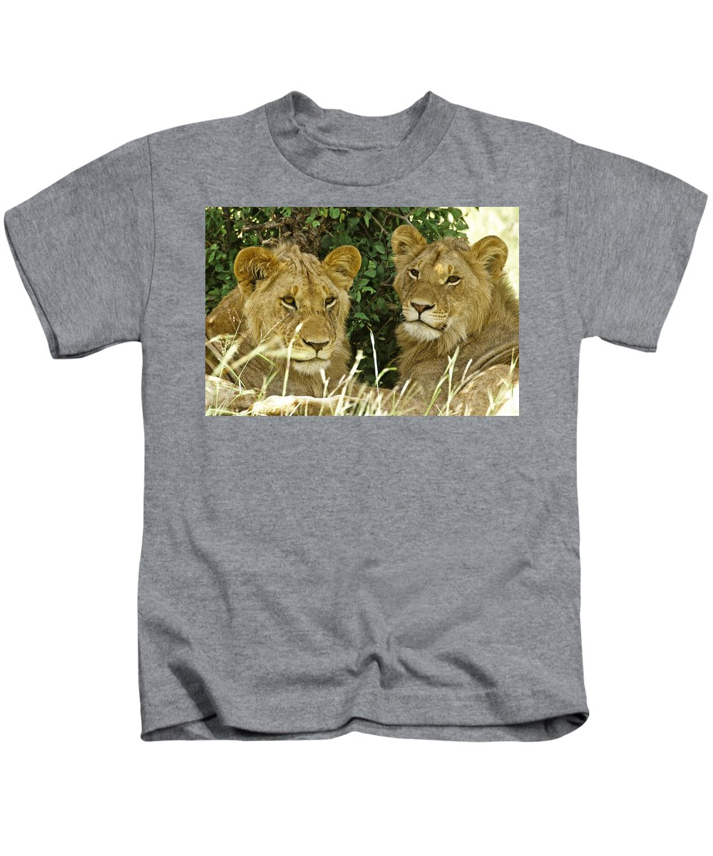Lion Kids T-Shirt featuring the photograph Young Brothers by Michele Burgess