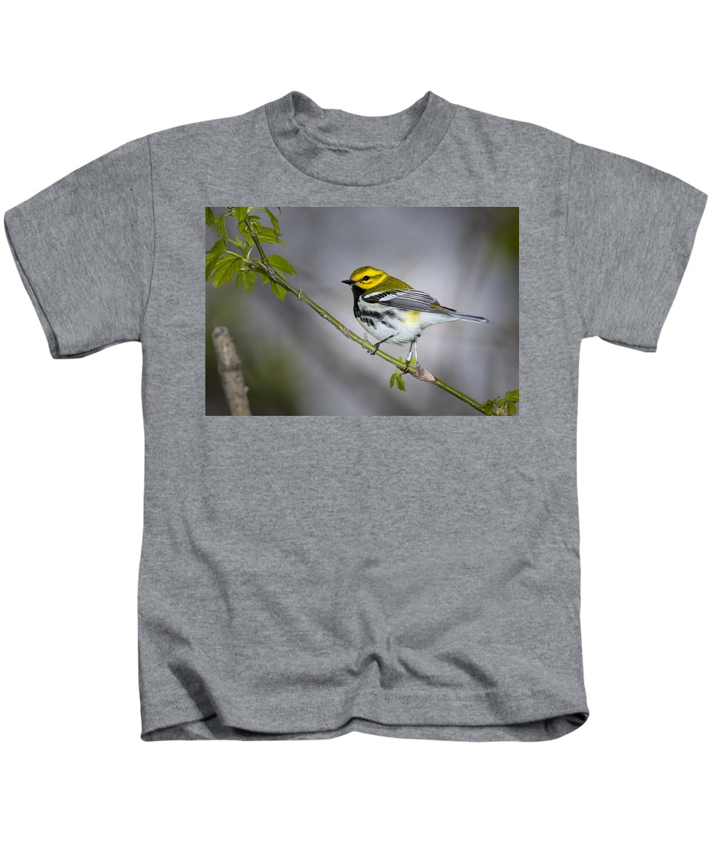 Animal Kids T-Shirt featuring the photograph Black Throated Green Warbler by Jack R Perry