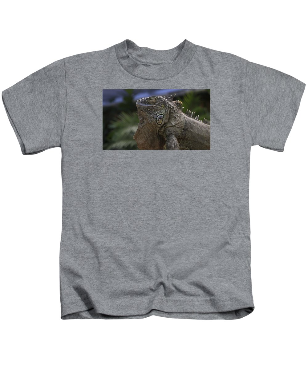 Lizard Kids T-Shirt featuring the photograph Iguana by FL collection