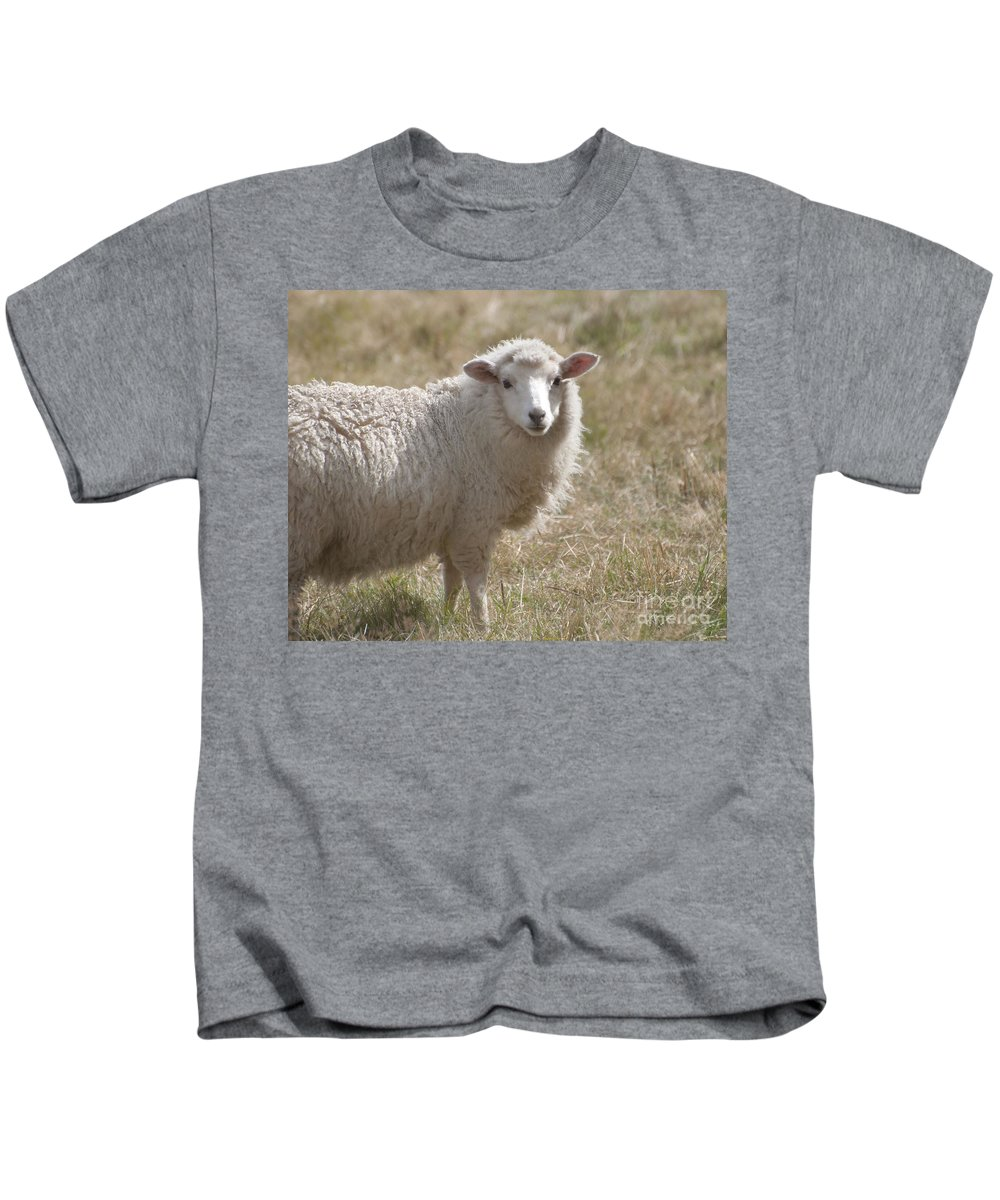 Adorable Sheep In New Zealand Kids T-Shirt featuring the photograph Adorable Sheep by Loriannah Hespe