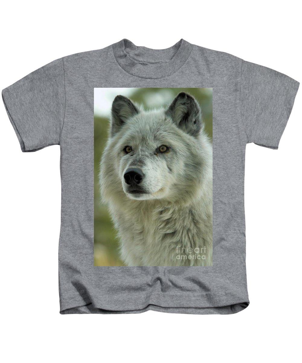 Alpha Wolf Kids T-Shirt featuring the photograph Alpha Curiosity by Adam Jewell