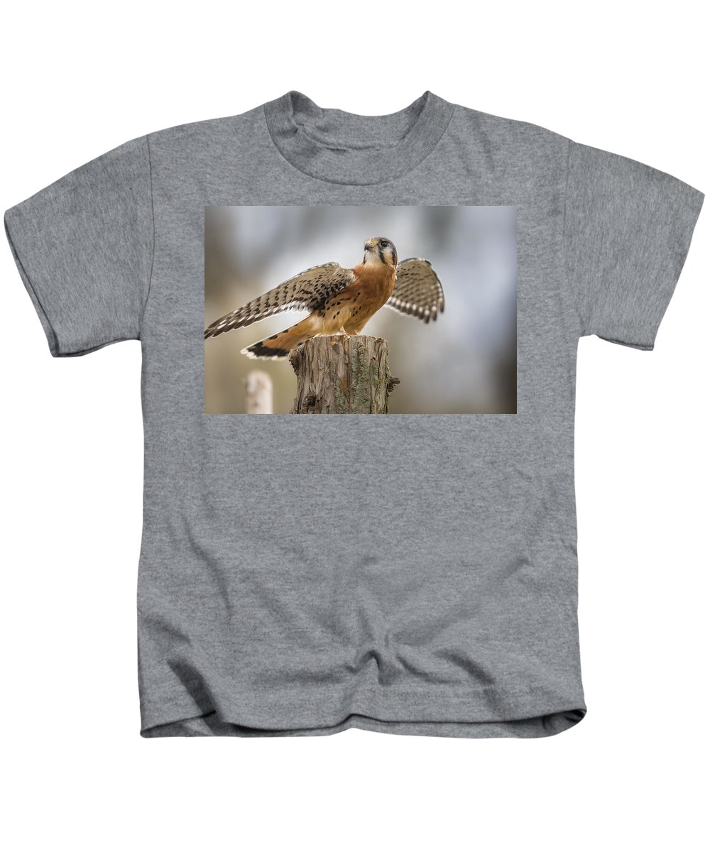 Agile Kids T-Shirt featuring the photograph American Kestral by Jack R Perry